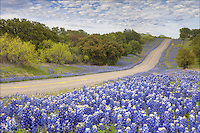 Between Llano and Castell, there is a nice little road called Hwy 152. It winds and curves through a lovely countryside. In the spring, this can be a great place to view the Texas state flower, with bluebonnets covering all sides of the road. Mixed into this river of blue, you can often find Indian Paintbrush. ..This bluebonnet picture was made in early April during the prolific bluebonnet season. I was fortunate to find great clouds as an overcast sky was beginning to dissipate, giving soft light and a little blue peeking through above me.