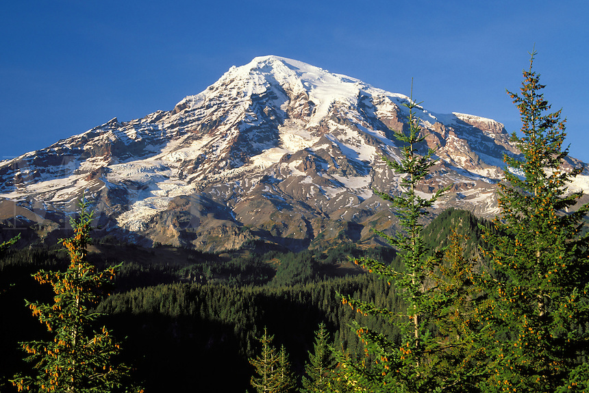 Mount Rainier framed by trees, from Rucksecker Point, Mount Rainier National Park, Lewis County, Pierce County, W
