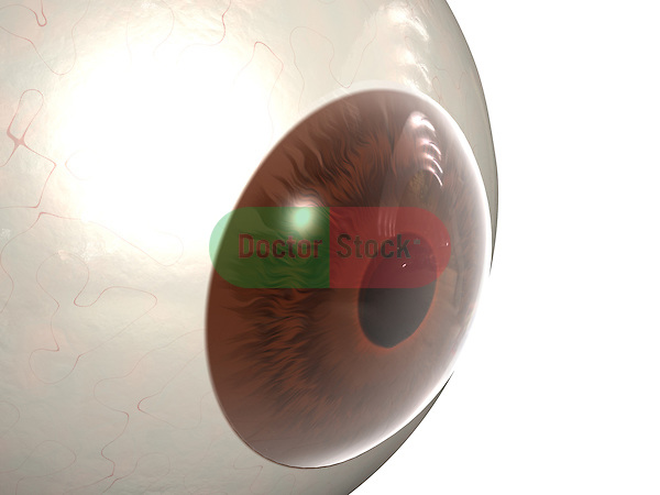 Eye; this 3d medical image features a detailed view of the eye.