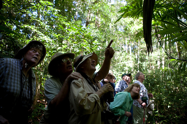 """Tourists at archeological site """"Tikal"""" insite the Mayan Biosphere Reserve."""