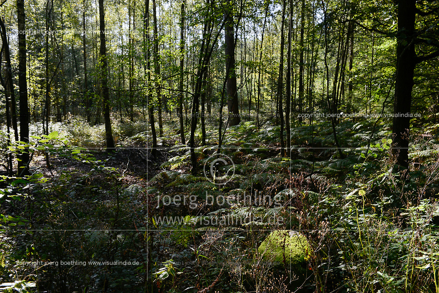 Germany, forest / DEUTSCHLAND, Wald in der Lueneburger Heide