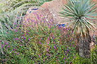 Purple salvia, a Yucca rostrata, Agave parryi and some beargrass (Nolina texensis) all combine with a large boulder to make a study in texture in Dan Johnson's Denver garden.