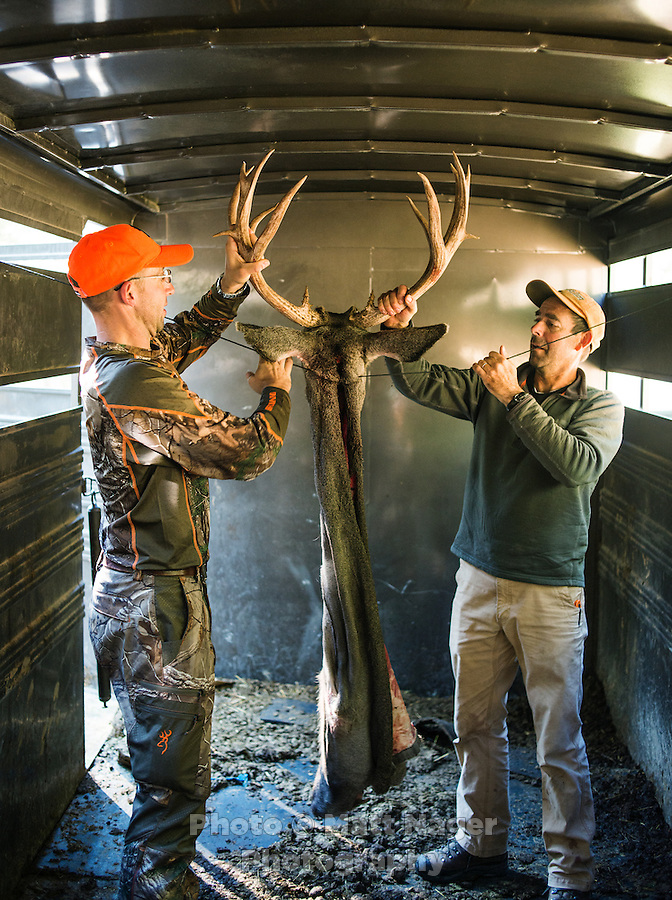 Outdoor Life Editor Andrew McKean and Mike Stock hang a mule deer cape and scull dry after a hunt with Trefren Outfitters on Greyback Ridge in the Hoeback Drainage of Wyoming Region H, outside of Alpine, Wyoming, September 22, 2015.<br /> <br /> Photo by Matt Nager