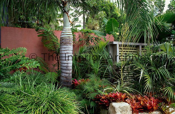 Rendered wall and louvre fencing with tropical foliage planting dominated by a large palm tree.