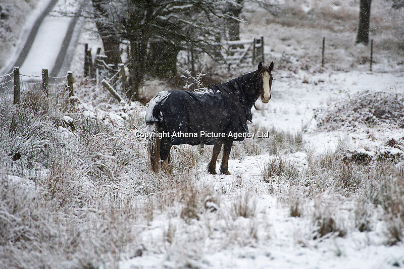 WEATHER PICTURE WALES<br /> Pictured: A horse in the snow near Penderyn, in Powys, Wales, UK. Tuesday 29 January 2019<br /> Re: A Met Office yellow warning for snow and ice for the whole of Wales has came into force.