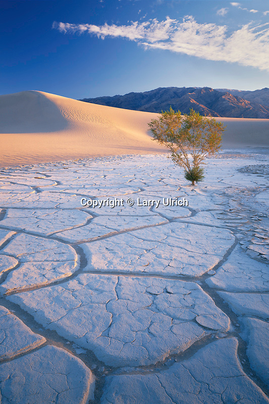 Playa and creosote bush<br />