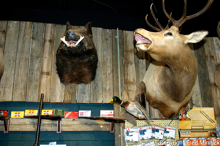 A stuffed boar and elk at the Kentucky Gun Company and Keene's Ham, the only store in America where you can purchase a gun, groceries and beer.