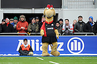 20130324 Copyright onEdition 2013©.Free for editorial use image, please credit: onEdition..Sarrie the Camel watches the Premiership Rugby match between Saracens and Harlequins at Allianz Park on Sunday 24th March 2013 (Photo by Rob Munro)..For press contacts contact: Sam Feasey at brandRapport on M: +44 (0)7717 757114 E: SFeasey@brand-rapport.com..If you require a higher resolution image or you have any other onEdition photographic enquiries, please contact onEdition on 0845 900 2 900 or email info@onEdition.com.This image is copyright onEdition 2013©..This image has been supplied by onEdition and must be credited onEdition. The author is asserting his full Moral rights in relation to the publication of this image. Rights for onward transmission of any image or file is not granted or implied. Changing or deleting Copyright information is illegal as specified in the Copyright, Design and Patents Act 1988. If you are in any way unsure of your right to publish this image please contact onEdition on 0845 900 2 900 or email info@onEdition.com
