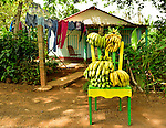 A Cuban farmhouse selling bananas.