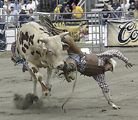 29 Aug 2004:PRCA Rodeo Bull Rider Beau Hill ranked 19th in the world riding the bull Night Vision gets tossed during the PRCA 2004 Extreme Bulls competition in Bremerton, WA.