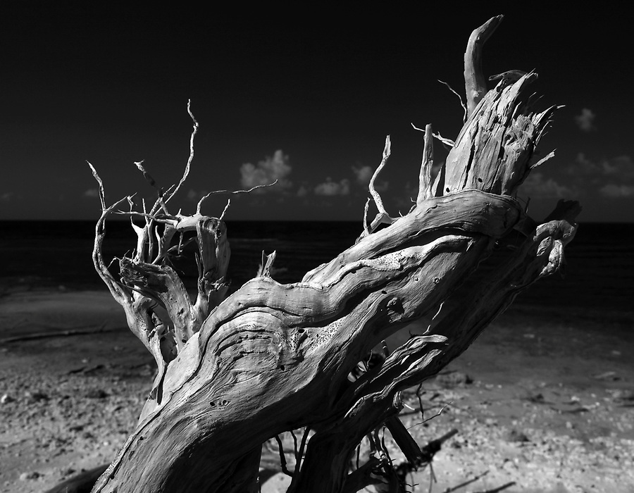 Hurricane storm art on jewell Key photographed using infrared Canon 5D Mark II camera in Florida's Everglades National Park out of Chokoloskee Island and the 10,000 Islands National Wildlife Refuge. Photo/Andrew Shurtleff