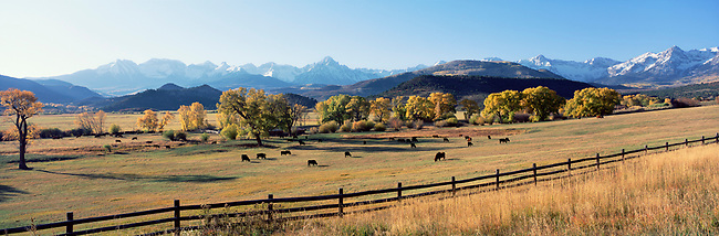 panorama, autumn, fall, pastoral, ranch, grain, fields, Colorado, cattle, cows