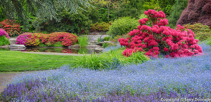 Seattle, WA<br /> Kubota Garden city park, spring view of the Tom Kubota Stroll Garden