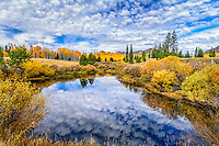 Colorado Aspens in Fall