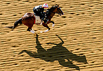 May 15, 2019 :  War of Will exercises on the track as horses prepare for Preakness Week at Pimlico Race Course in Baltimore, Maryland. Scott Serio/Eclipse Sportswire/CSM
