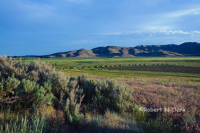Alfalfa field near Silver Creek in the Picabo area