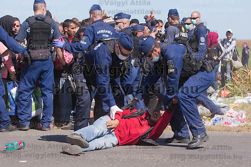 Collapsing man is being helped by members of a line of police officers standing guard at a collection point of illegal migrants near Roszke (about 174 km South of capital city Budapest), Hungary on September 07, 2015. ATTILA VOLGYI