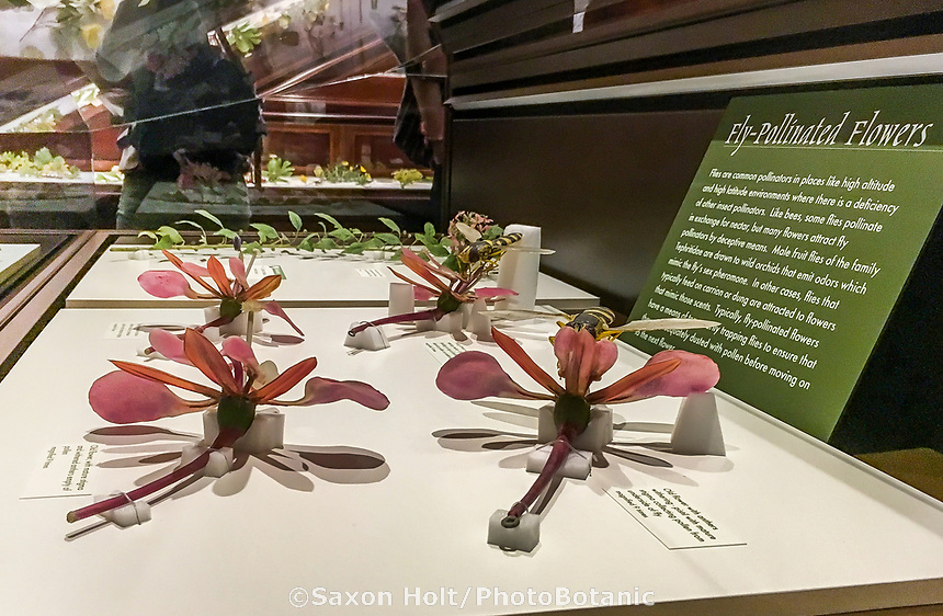 Fly pollination display in The Ware Collection of Blaschka Glass Models of Plants Exhibit in Harvard Museum of Natural History