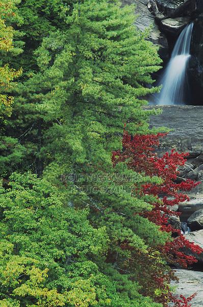 Falls and trees with fall foliage, Whitewater Falls, Nantahala National Forest, North Carolina, USA