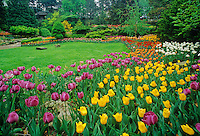 Tulips in urban garden; Royal Botanical Gardens. Hamilton, Ontario