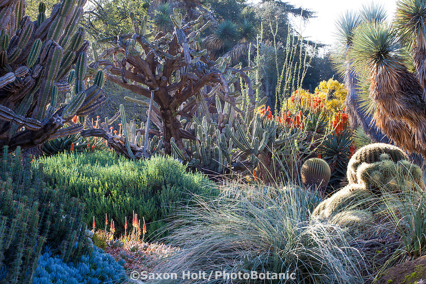 Drought tolerant succulent collection in the Desert Garden at Huntington Library Botanical Garden