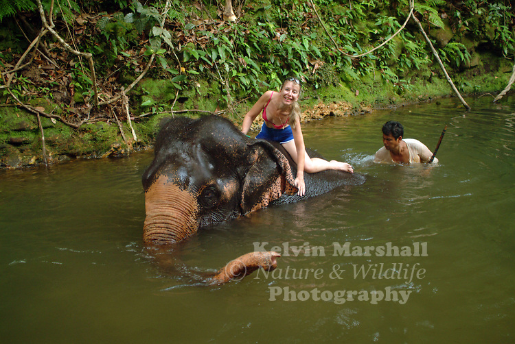 A western tourist helping an Asian elephant to take a bath.