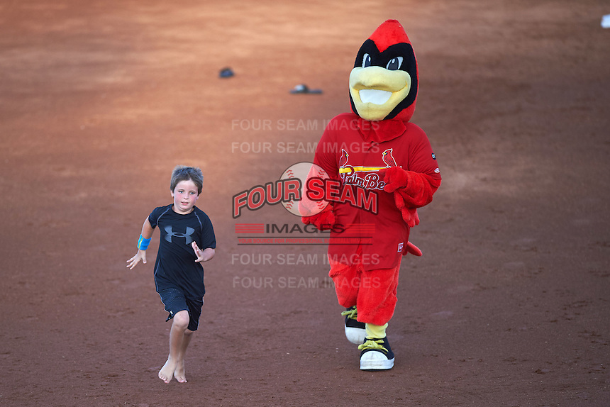 Palm Beach Cardinals mascot Robby the Redbird races a young fan in between innings during a game against the Jupiter Hammerheads  on August 12, 2016 at Roger Dean Stadium in Jupiter, Florida.  Jupiter defeated Palm Beach 9-0.  (Mike Janes/Four Seam Images)