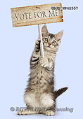 Kim, ANIMALS, REALISTISCHE TIERE, ANIMALES REALISTICOS, cats, photos,+Silver tabby kitten, Loki, 11 weeks old, with placard,++++,GBJBWP42557,#a#