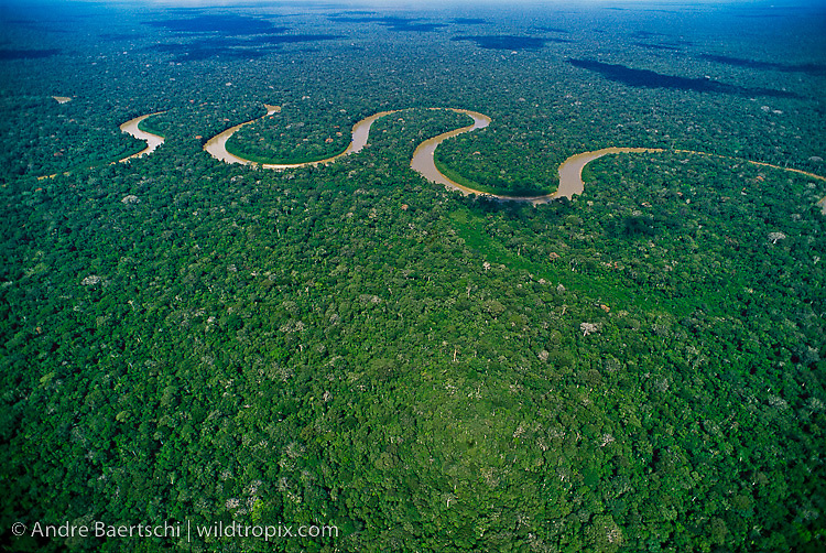Rio Pinquen meandering through lowland tropical rainforest, Manu National Park, Madre de Dios, Peru.