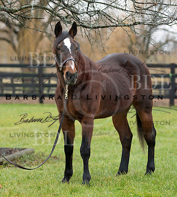 Sir Taurus (b. 1984, by Speedy Crown - Vanessa Hill), world champion Standardbred and holder of 6 track records, at his longtime Blue Chip Farms home in 2012.