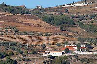 vineyards quinta da cavadinha warre's douro portugal