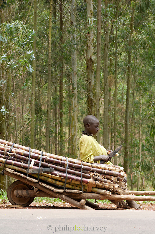 Young boy waiting with a cart of cut wood near Parc National Des Volcans, Rwanda