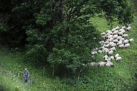 SWITZERLAND Kanton Wallis agriculture in the mountains, grazing of Basco-Béarnaise sheps / SCHWEIZ Kanton Wallis Landwirtschaft auf Alpen zur Beweidung von Flaechen und Vermeidung von Verbuschung der Kulturlandschaften, Jean-Luc Delarzes in Bruesont. Bio Suisse zertifizierter Betrieb, Haltung Milchschafe der Rasse Basco-Béarnaise