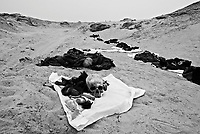 Near Nedjaf, Iraq, May 26, 2003.According to local sources, more than a hundred and forty mass graves are located in the desert around the city of Nedjaf; most of the recovered bodies appear to be of civilians, including some women and children. .Unfortunately, the diggings are often executed without proper methodology which leads to the destruction of evidence against the perpetrators but perhaps more crucialy prevents accurate identifications of the remains.