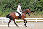 Stapleford Abbotts. United Kingdom. 03 August 2019. Class 5. Unaffiliated dressage. Brook Farm training centre. UK.~ 03/08/2019.  MANDATORY Credit Ellen Szalai/Sport in Pictures - NO UNAUTHORISED USE - 07837 394578
