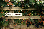 'WINE IN ENGLAND, SOMERSET', ARROW SIGN DIRECTING VISITORS TO 'WINE TASTING', PILTON MANOR VINEYARD, 1989