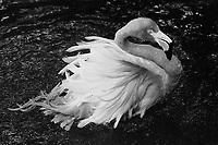 Flamingo, Film  2018