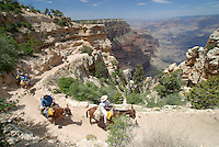 4415 / Grand Canyon: AMERIKA, VEREINIGTE STAATEN VON AMERIKA, ARIZONA,  (AMERICA, UNITED STATES OF AMERICA), 14.05.2006: Mulitour in den Grand Canyon.Der Grand Canyon (Gewaltige Schlucht) ist eine steile, etwa 450 km lange Schlucht im Norden des US-Bundesstaats Arizona, die ueber Millionen von Jahren vom Fluss Colorado ins Gestein des Colorado Plateau gegraben wurde. Der groesste Teil des Grand Canyon liegt im Grand-Canyon-Nationalpark...Der Canyon zaehlt zu den grossen Naturwundern auf dieser Welt und wird jedes Jahr von rund 5 Millionen Menschen besucht...Der Grand-Canyon-Nationalpark liegt im Nordwesten von Arizona, noerdlich von Williams und Flagstaff und etwa 365 km noerdlich der Hauptstadt Phoenix. .Der Grand Canyon ist etwa 450 km lang (davon liegen 350 km innerhalb des Nationalparks), zwischen 6 und 30 km breit und bis zu 1.800 m tief. Der Name des Canyons stammt vom Colorado River, der frueher in Teilen Grand River genannt wurde (deutsch: Gewaltiger Fluss/Canyon, aber auch Großartiger Fluss/Canyon)..Das Gebiet um das Tal wird in drei Regionen aufgeteilt: den Suedrand (south rim), der die meisten Besucher anzieht, den hoeher gelegenen und kuehleren Nordrand (north rim) und die Innere Schlucht (inner canyon) mit 5 Klimazonen..Flussaufwaerts, im suedlichen Utah liegen andere große Schluchten des Colorado. Der Glen Canyon, der seit 1964 im Stausee des Lake Powell versunken ist, galt landschaftlich als besonders schoen. Weiter im Norden liegt der Canyonlands-Nationalpark. Flussabwaerts, in der Naehe von Las Vegas, liegt der Stausee Lake Mead am Hoover-Staudamm...