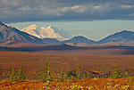 Denali peaks out over the colorful tundra in fall at Denali National Park and Preserve, Alaska, USA