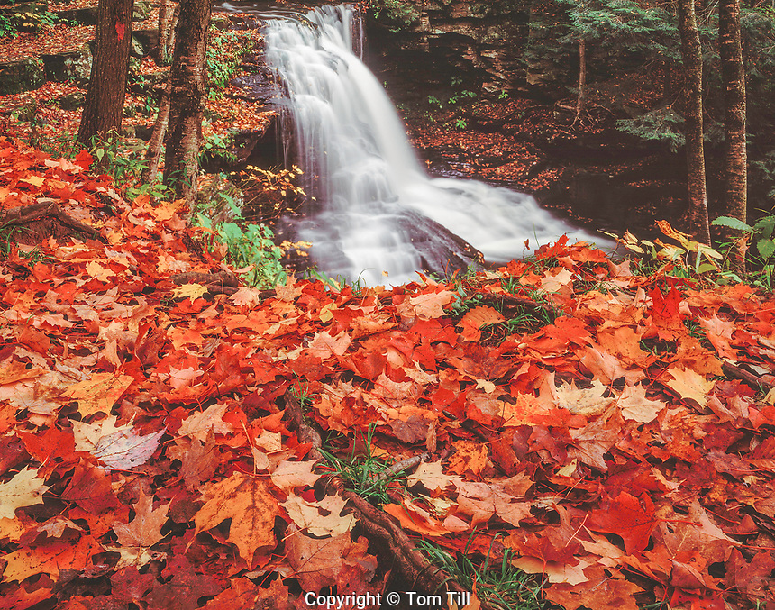 Falls & Forest, Wyoming State Forest, Pennsylvania  Appalachian Mountains