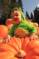 Jerseydale Pumpkin Ranch 2013