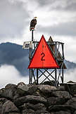 USA, Alaska, Seward, a bald eagle spotted on the jetty while heading out of the Seward Harbor and Marina