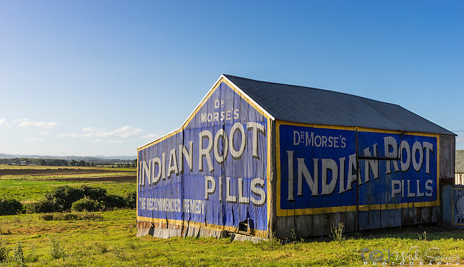 Dr Morse's Indian Root Pills Sign on side of barn at Morpeth, NSW, Australia