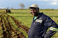 ZAMBIA, Mazabuka, Chikankata area, medium scale farmer Stephen Chinyama, contract cotton farmer for LDC Louis Dreyfuss Company