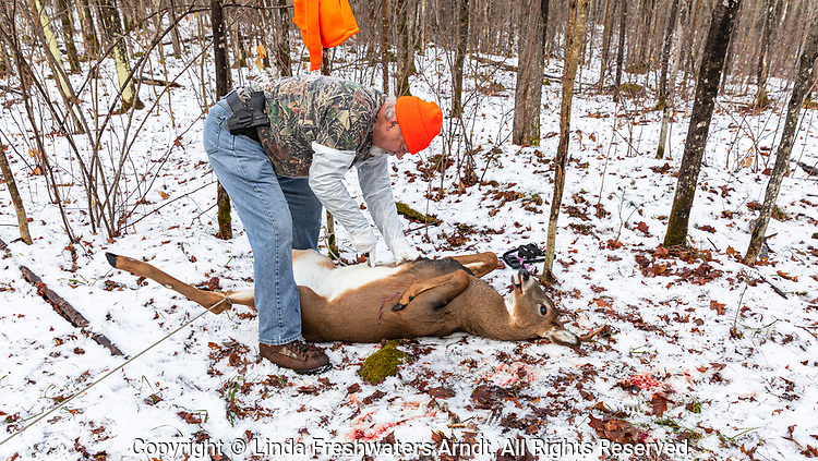 Wisconsin hunter field dressing a white-tailed buck in a winter forest.