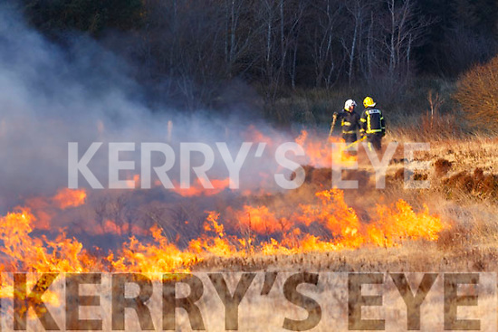 Fire Crews from four Fire Stations in South Kerry attended fires in Ardcost, Portmagee on Wednesday 28th, the last day allowable for the burning off of scrub land.  Heroic work by the crews kept the fires from claiming several of the forests in the area.