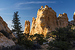 A tall Ponderosa Pine and smaller Pinyon Pines in front of colorful sandstone hoodoos, or rock formations, in the Head of Sinbad Area of the San Rafael Swell in Utah.