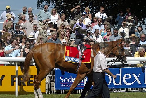 7 August 2004: Horses parading in the Paddock on The Blue Square Shergar Cup day at Ascot. Photo: Neil Tingle/action plus...horse racing 040807 crowd