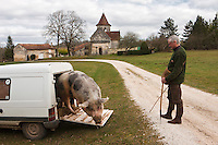 Europe/France/Aquitaine/24/Dordogne/Env de Mareuil: Cavage, recherche de la Truffe avec Mr Chaume et sa truie : Nini [Autorisation : 2011-110] [Non destiné à un usage publicitaire - Not intended for an advertising use]