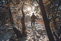 a ray of sunlight passes through the leaves and branches of the oak tree, during a day with clear sky and blue sky. Winter in Cananea, Sonora, Mexico. Snow on the La Mariquita and Sierra Elenita mountains. 2020. (Photo by: GerardoLopez / NortePhoto.com)...<br /> ...........<br /> un rayo de luz de sol atraviesa las hojas y ramas de  arbol encino, durante un dia con cielo despejado y cielo azul. Invierno en Cananea, Sonora, Mexico.  Nieve en la siera la Mariquita y sierra Elenita . 2020. (Photo by: GerardoLopez/NortePhoto.com )